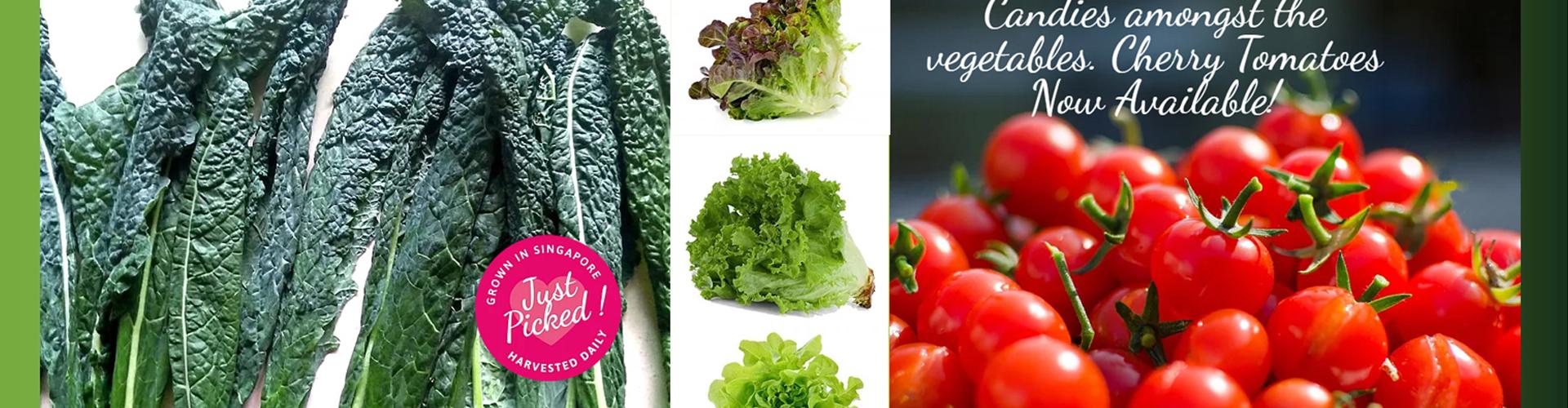 Live-Fresh-Farm_Banner-7_N